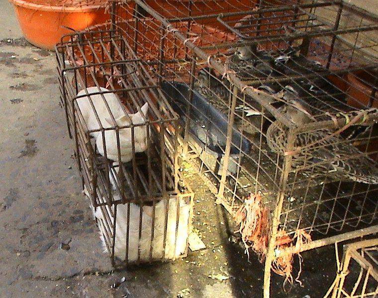 Prodej koček na maso v Asijské tržnici.